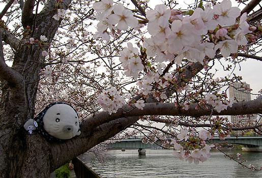 050407_1646_gomasakura.jpg