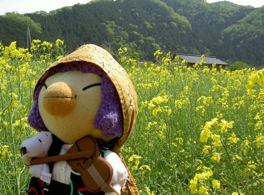 050505_1424_nanohana.jpg